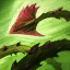 Zyra's E: Grasping Roots